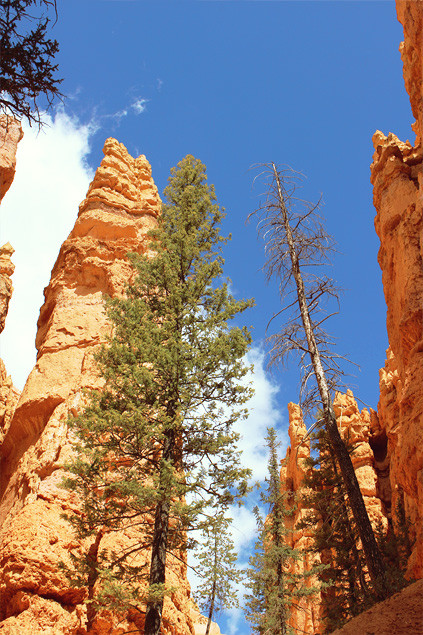 etats-unis-bryce-canyon-peekaboo-loop-01