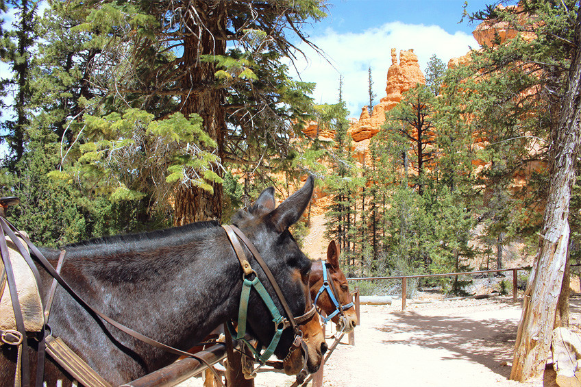 etats-unis-bryce-canyon-peekaboo-loop-6