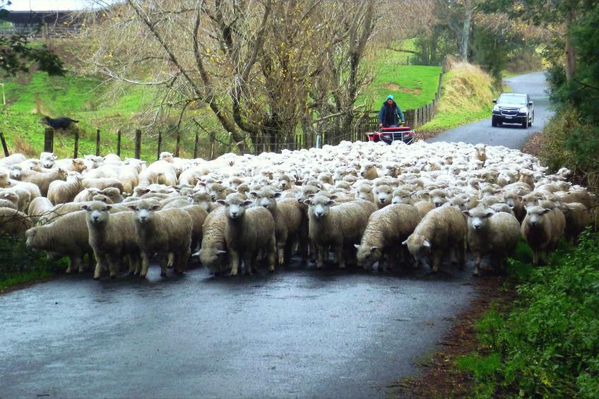 itineraire-road-trip-ile-du-nord-nouvelle-zelande24