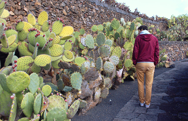 lanzarote-jardin-de-cactus-04