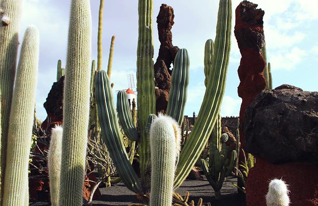 lanzarote-jardin-de-cactus-05
