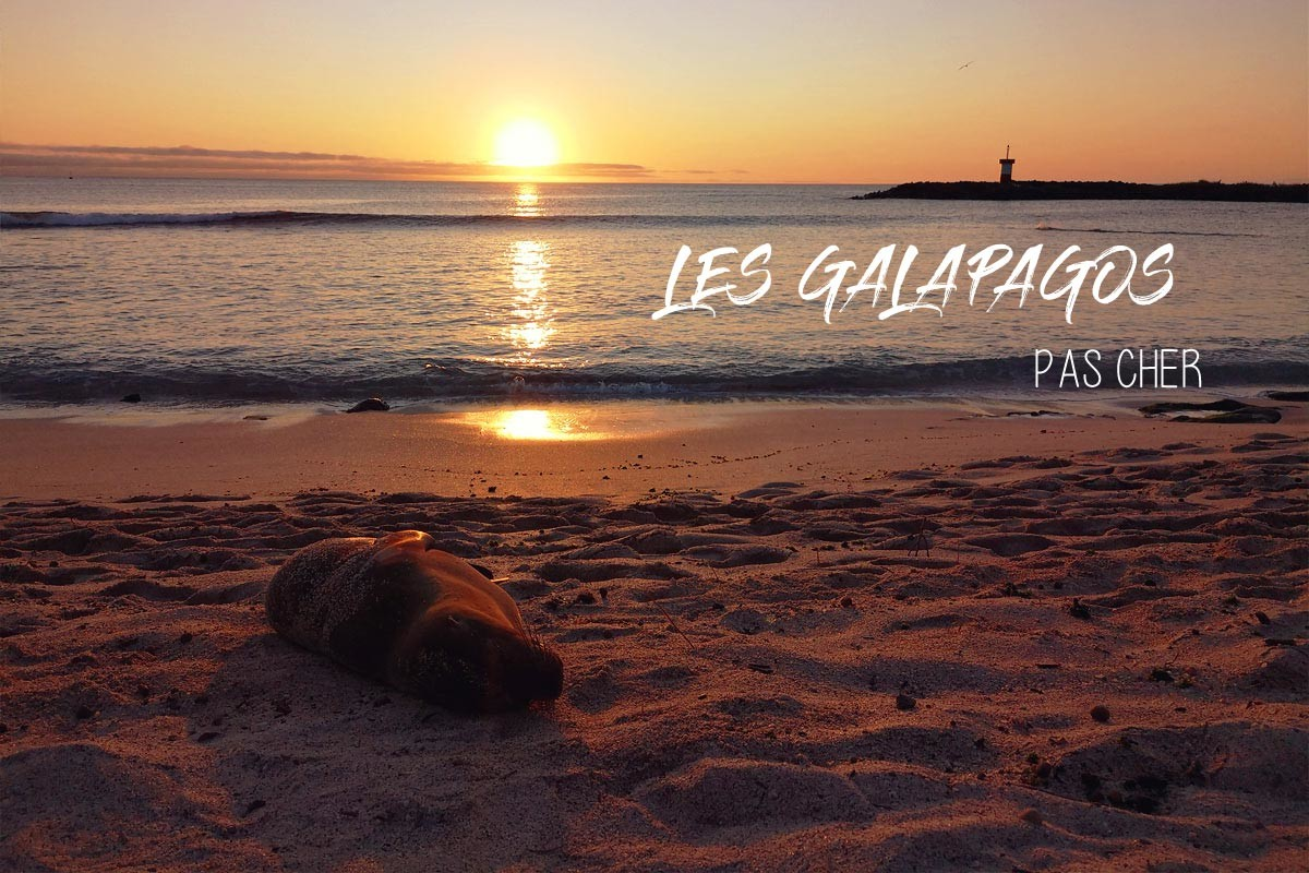 Les îles Galapagos pas cher : le guide complet