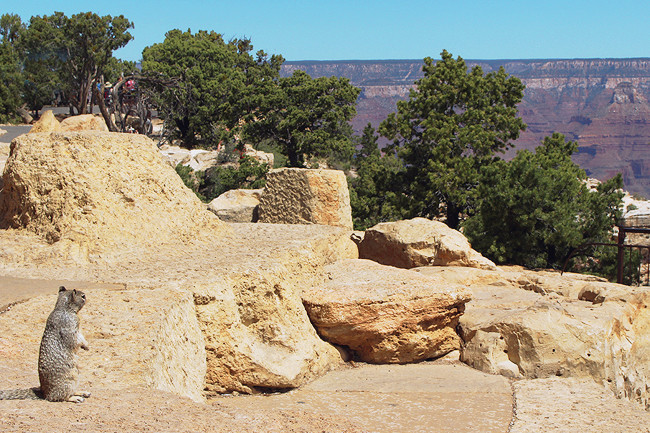 road-trip-usa-visiter-grand-canyon-11