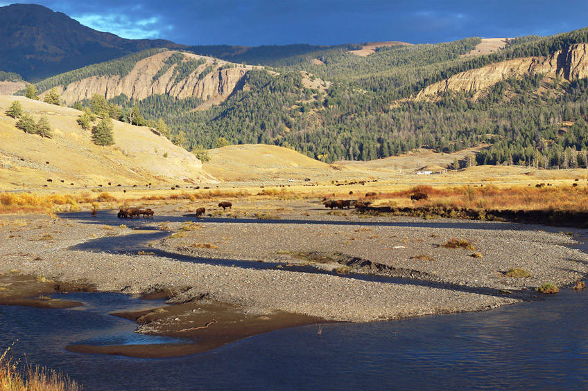 yellowstone-secteur-norris-mammoth-hot-springs-lamar-valley15