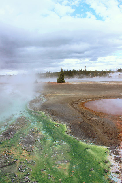 Yellowstone (1/3) : Secteur Norris, Mammoth Hot Springs et Lamar Valley