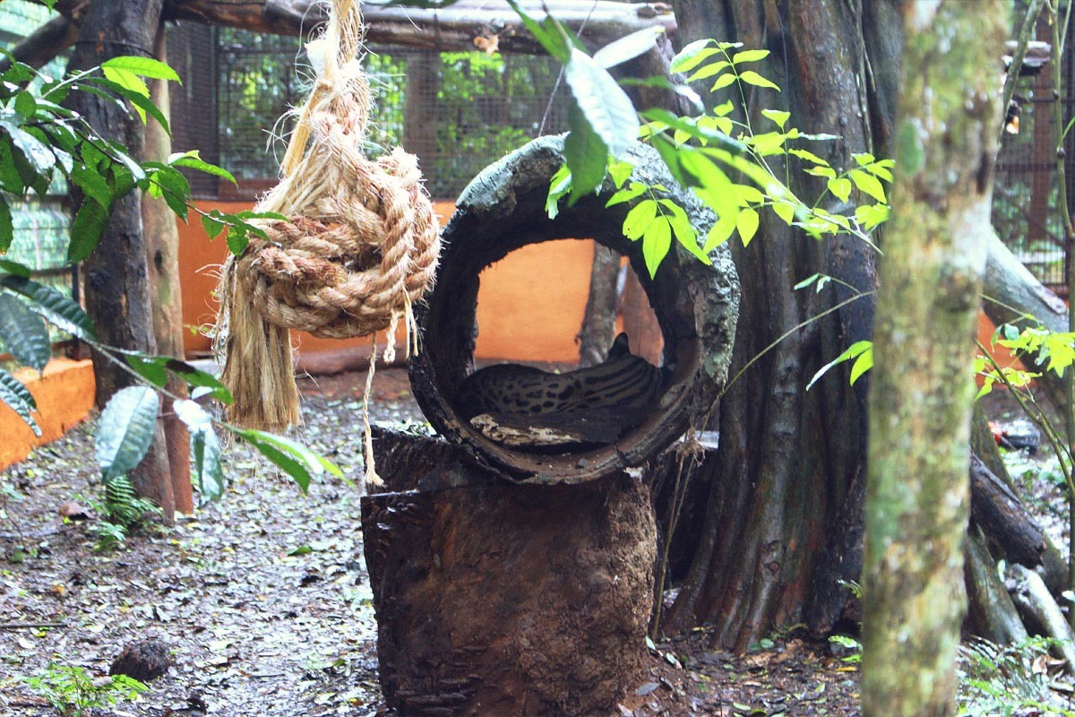 les-chutes-d-iguazu-une-merveille-de-la-nature-18