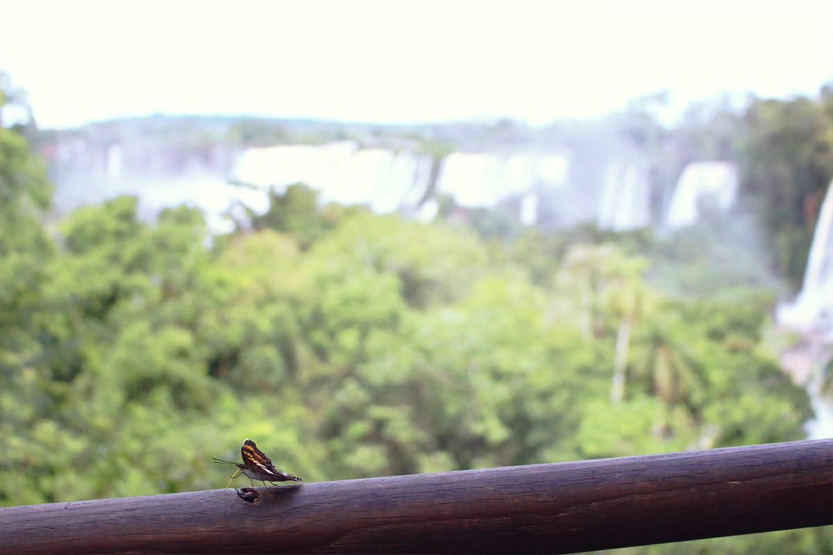 les-chutes-d-iguazu-une-merveille-de-la-nature-2